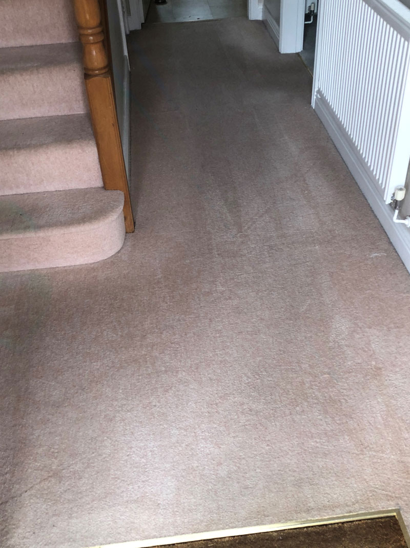 Carpet-after-cleaning